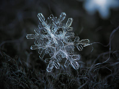 Poster featuring the photograph Snowflake Of January 18 2013 by Alexey Kljatov