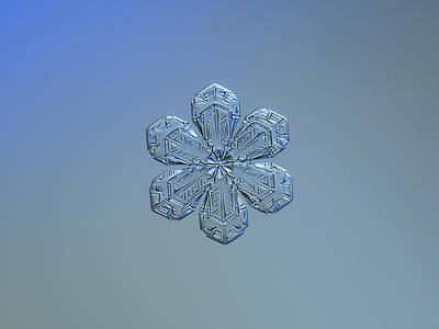 Snowflake Photo - Forget-me-not Poster by Alexey Kljatov