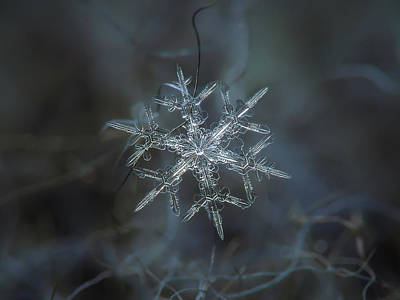 Snowflake Photo - Rigel Poster