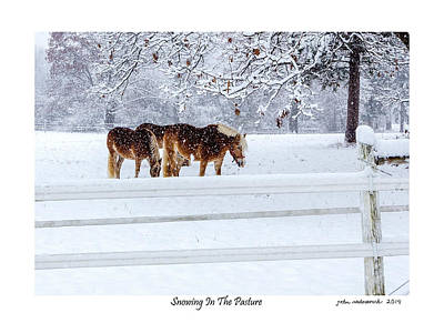 Snowing In The Pasture Poster by John Radosevich