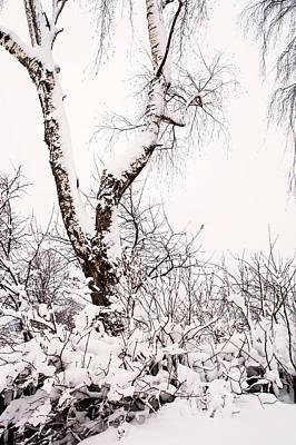 Snowy Birch Tree. Russia Poster by Jenny Rainbow