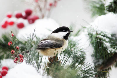 Snowy Chickadee Bird Poster