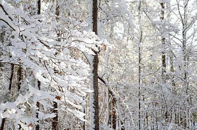 Snowy Dogwood Bloom Poster