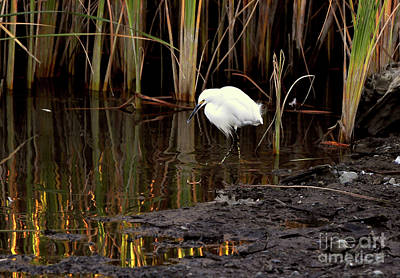 Poster featuring the photograph Snowy Egret In Late Afternoon by Susan Wiedmann