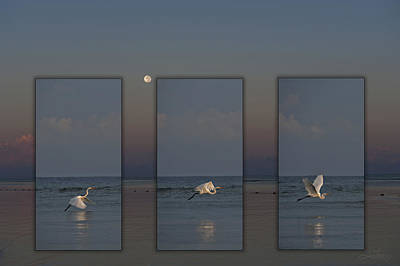 Snowy Egret Moon Poster