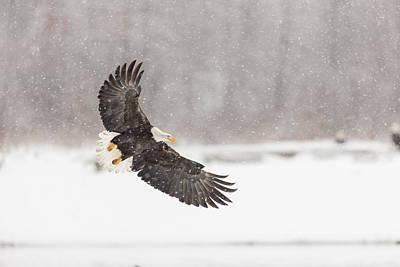Snowy Landing Poster by Tim Grams