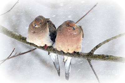Snowy Mourning Dove Pair Poster by Lila Fisher-Wenzel
