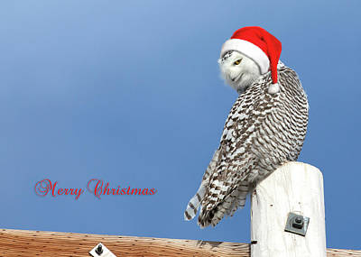 Poster featuring the photograph Snowy Owl Christmas Card by Everet Regal