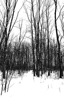 Snowy Trail Through The Woods Poster