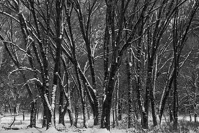 Snowy Yosemite Woods In Black And White Poster
