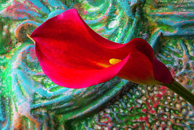 So Red Calla Lily Poster by Garry Gay