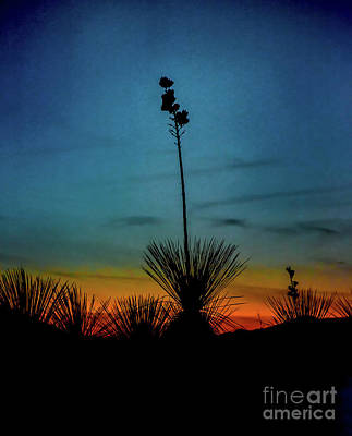 Soaptree Yucca At Sunset Poster