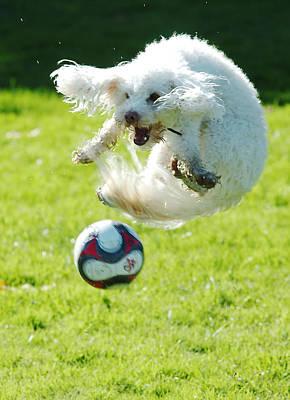 Soccer Dog-1 Poster by Steve Somerville
