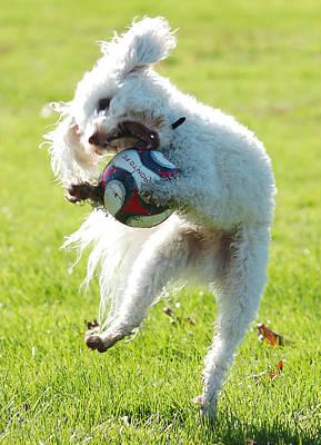 Soccer Dog-2 Poster by Steve Somerville