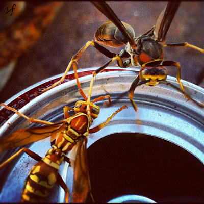 Poster featuring the photograph Soda Pop Bandits, Two Wasps On A Pop Can  by Shelli Fitzpatrick
