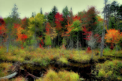 Poster featuring the photograph Soft Autumn Color by David Patterson