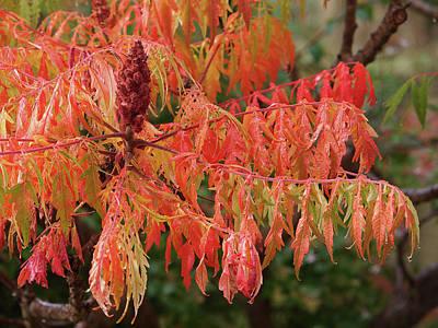 Soft Autumn Rain On Sumac Leaves Poster by Gill Billington