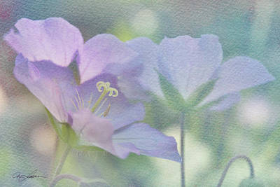 Poster featuring the photograph Soft Blue by Ann Lauwers