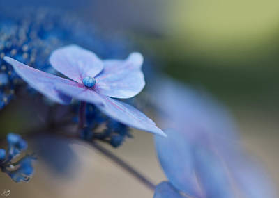 Soft Blue Moment Poster by Lisa Knechtel