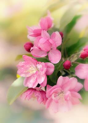 Soft Apple Blossom Poster by Jessica Jenney