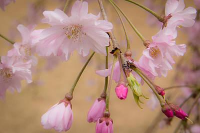 Soft Spring Blossoms Poster