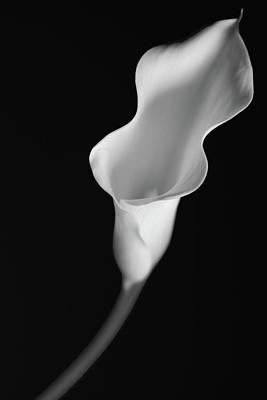 Softly Poster