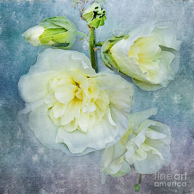 Softly In Blue Poster by Betty LaRue