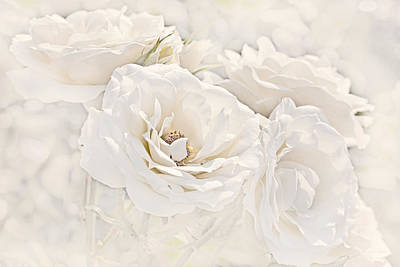 Softness Of Ivory Roses Poster