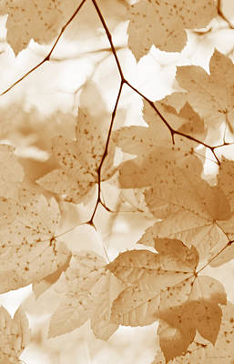 Softness Of Rusty Brown Leaves Poster