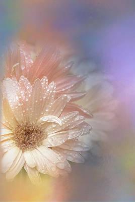 Softness Receding Poster