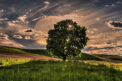 Solitarty Backlit Tree In The Palouse Poster