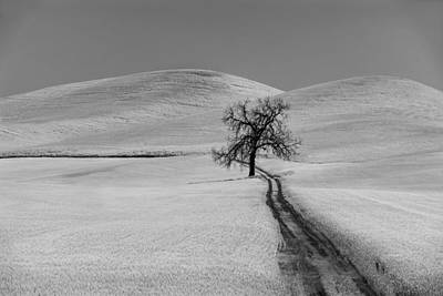 Solitary Oak Poster by Jon Glaser