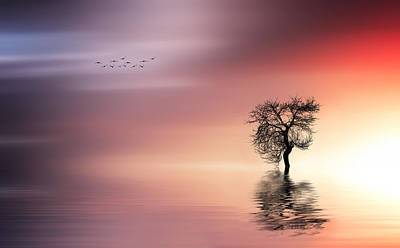 Solitude Poster by Bess Hamiti