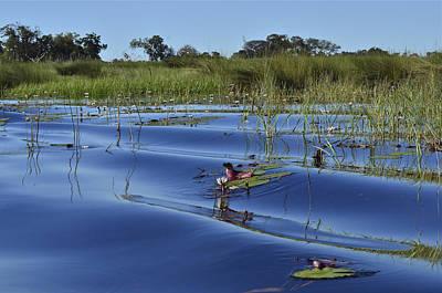 Solitude In The Okavango Poster