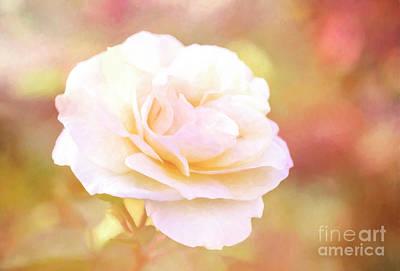Solstice Rose Poster
