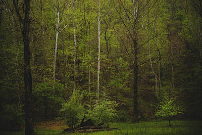 Poster featuring the photograph Somewhere In The Woods by Shane Holsclaw
