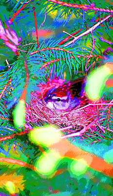 Song Sparrow On Nest Image Poster by Paul Price