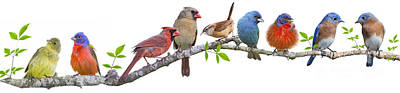 Songbirds On A Leafy Branch Poster
