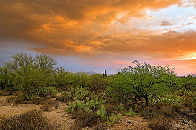 Poster featuring the photograph Sonoran Desert H11 by Mark Myhaver