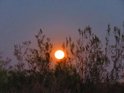 Sonoran Desert Harvest Moon Poster