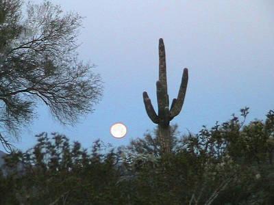 Sonoran Desert Moonset Poster