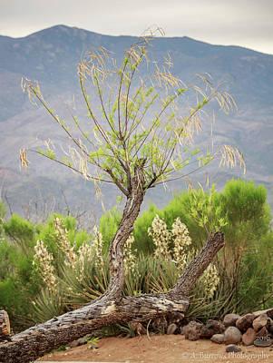 Sonoran Flora Poster