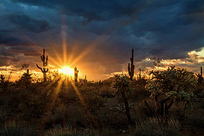 Poster featuring the photograph Sonoran Gold At Sunset  by Saija Lehtonen