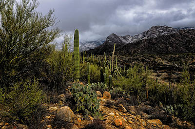 Poster featuring the photograph Sonoran Winter No.1 by Mark Myhaver