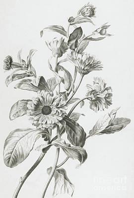 Souci Des Jardins Poster by Gerard van Spaendonck