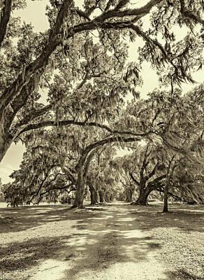 Southern Lane - Evergreen Plantation -sepia Poster