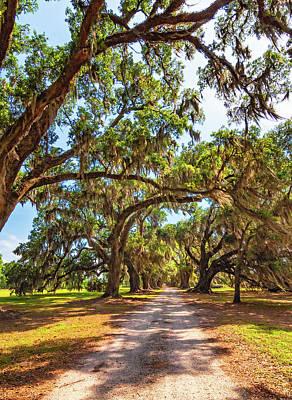 Southern Lane - Evergreen Plantation Poster