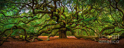 Angel Oak In Charleston Poster