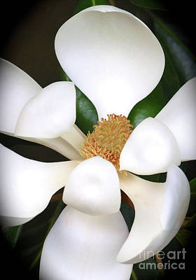 Southern Magnolia Cameo Poster