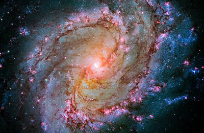 Southern Pinwheel Galaxy - Messier 83 -  Poster by Jennifer Rondinelli Reilly - Fine Art Photography